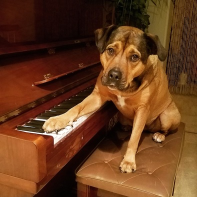 blog-loving-dog-plays-piano.jpg