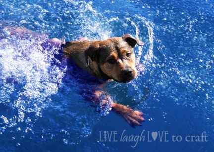 blog-lake-dog-swimming