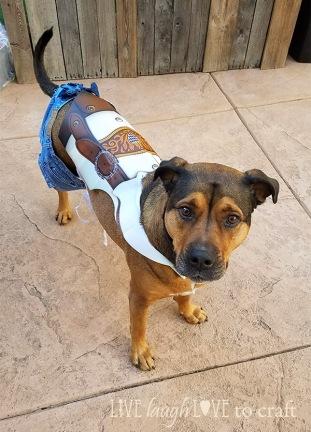 blog-oktoberfest-lederhosen-costume-for-dog-apron.jpg